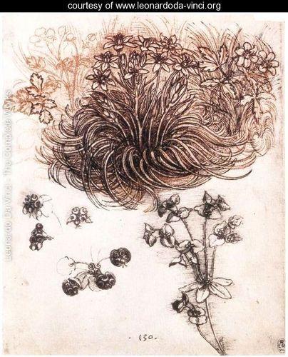 Star Of Bethlehem And Other Plants Leonardo Da Vinci Leonardo Da Vinci Star Of Bethlehem Drawings