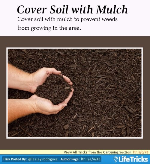 Cover Soil with Mulch