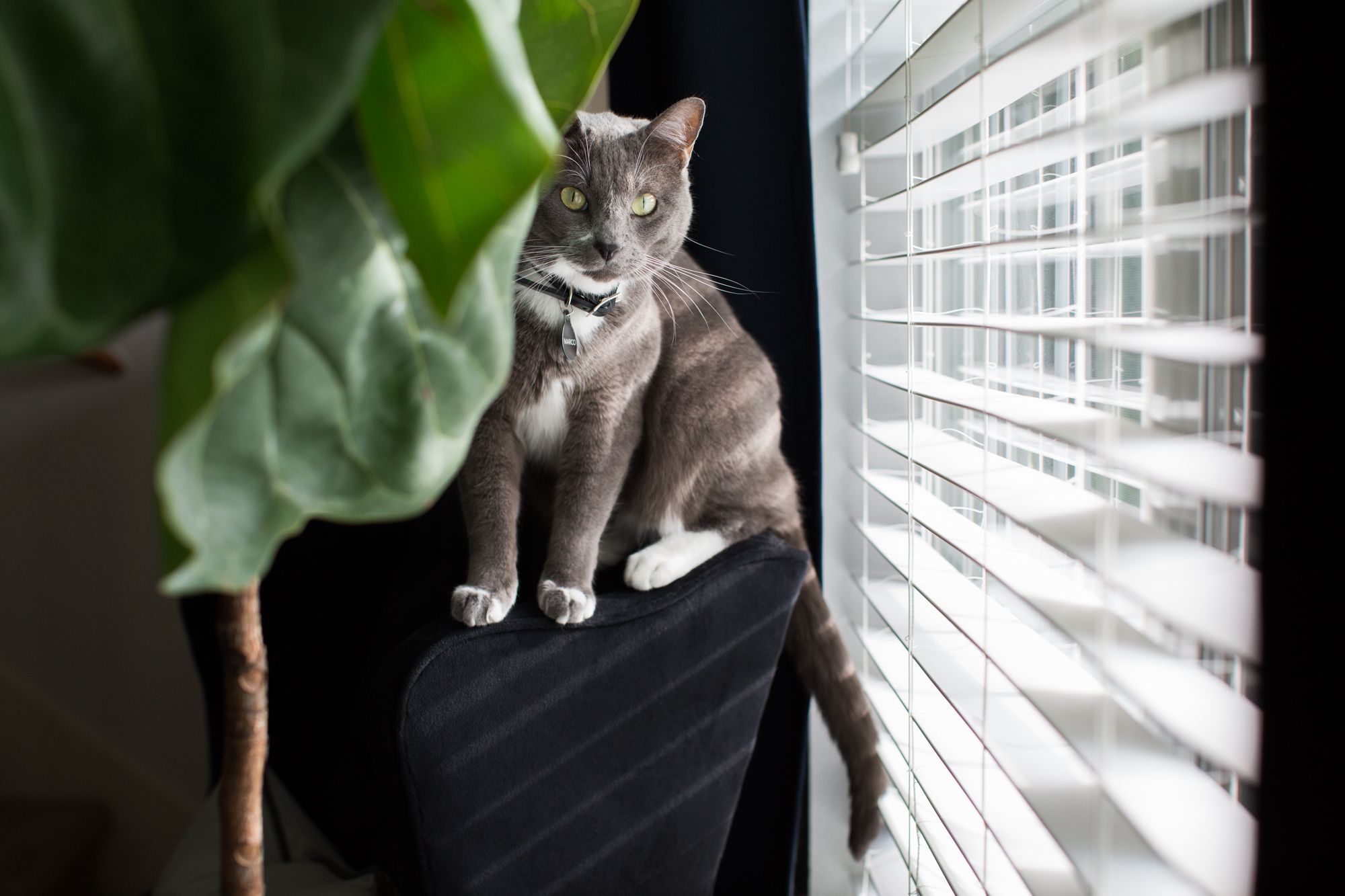 How To Make A Small Apartment More Fun For Your Cat Cat Care Cat Diy Cat Playground Outdoor