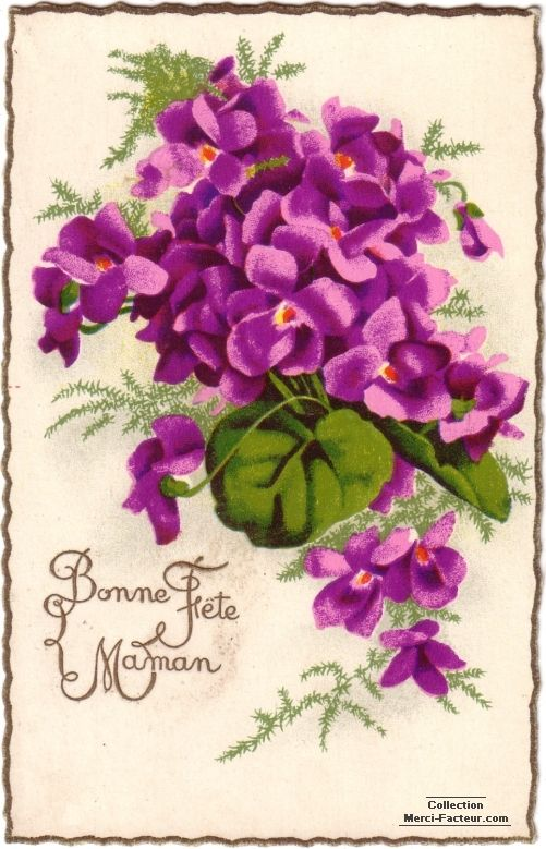Bonne Fete Maman Violettes Fete Des Meres Vintage Carte Fete