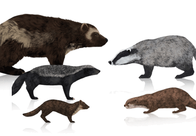 How to Draw Animals: Wolverines, Badgers, Otters and Martens