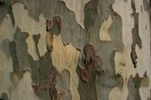 Photo of Wie man mit echtem Baum malt Camo #recreationalroom #recreational #room #signs, #Camo #paint …