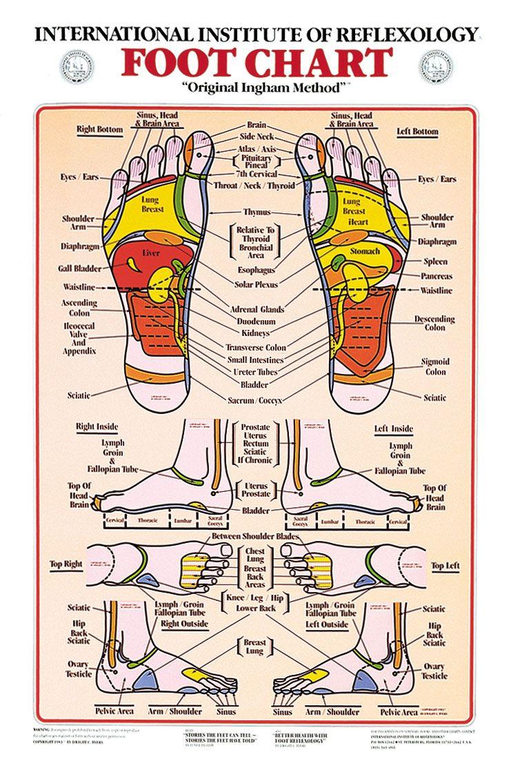 Foot Reflexology Chart Foot Chart Reflexology Reflexology Foot Chart