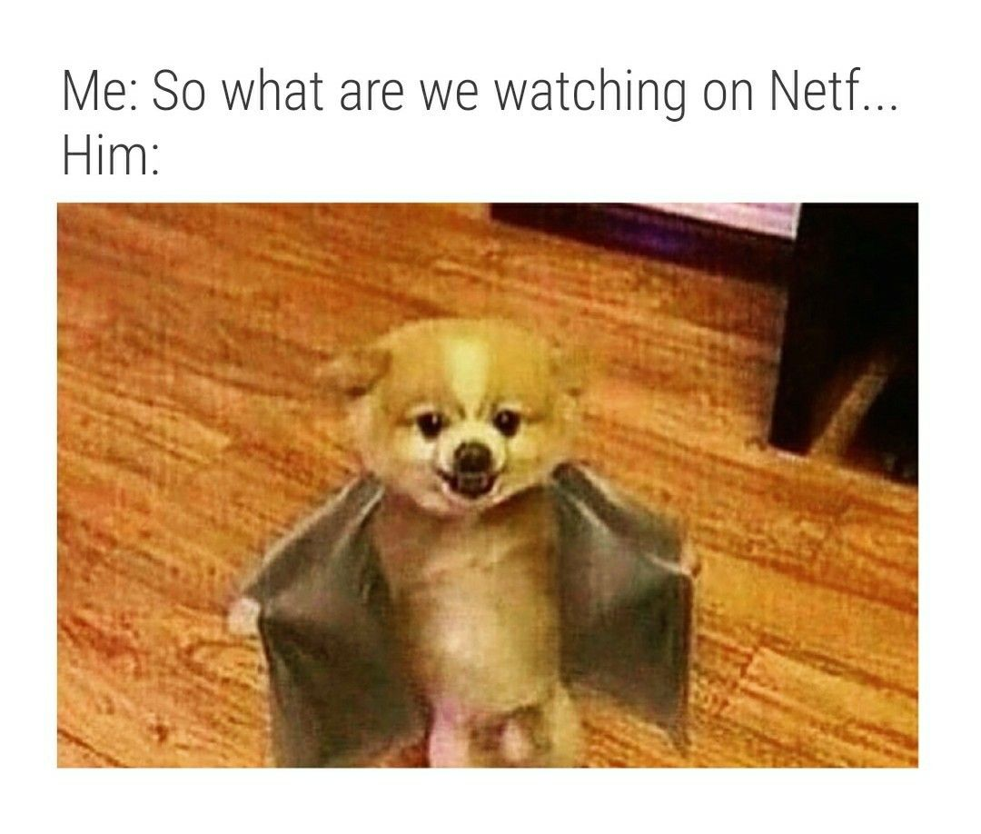 """and chill"""" Smh... Funny pictures, Funny animals"""