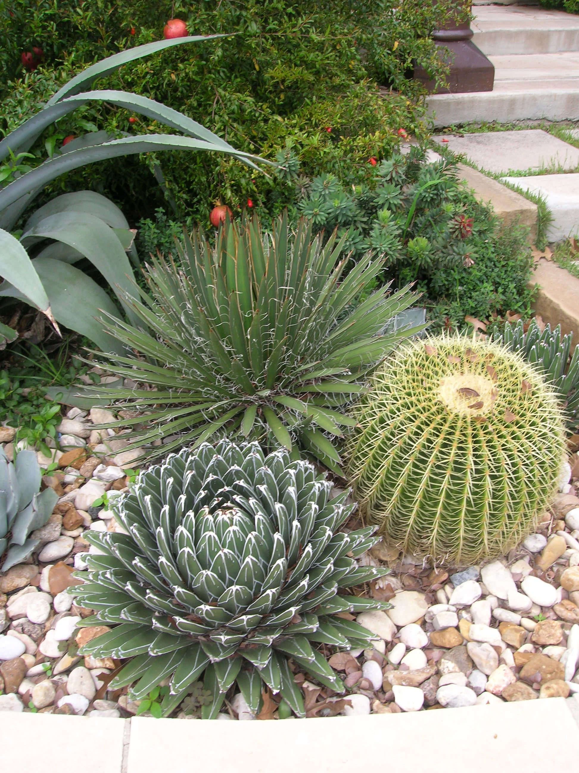 Landscaping Pictures Of Texas Xeriscape Gardens And Much ...