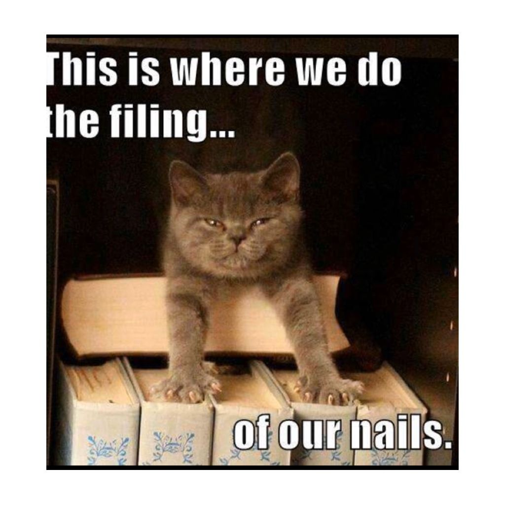 Clients Like Ok In 2020 Funny Animal Memes Funny Animal Pictures Funny Cat Memes