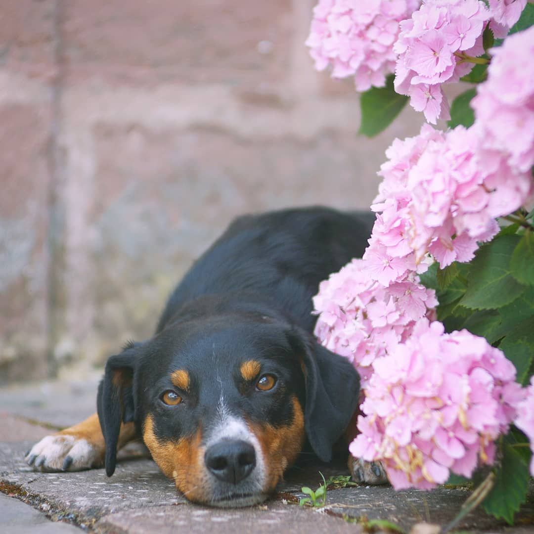 Habt Ein Schones Wochenende Wir Verabschieden Uns Fur Das Wochenende Und Auch Fur Die Nachsten Tage Ich Weiss Ja Nicht Wie Viel Zeit Mir In Der Animals Dogs