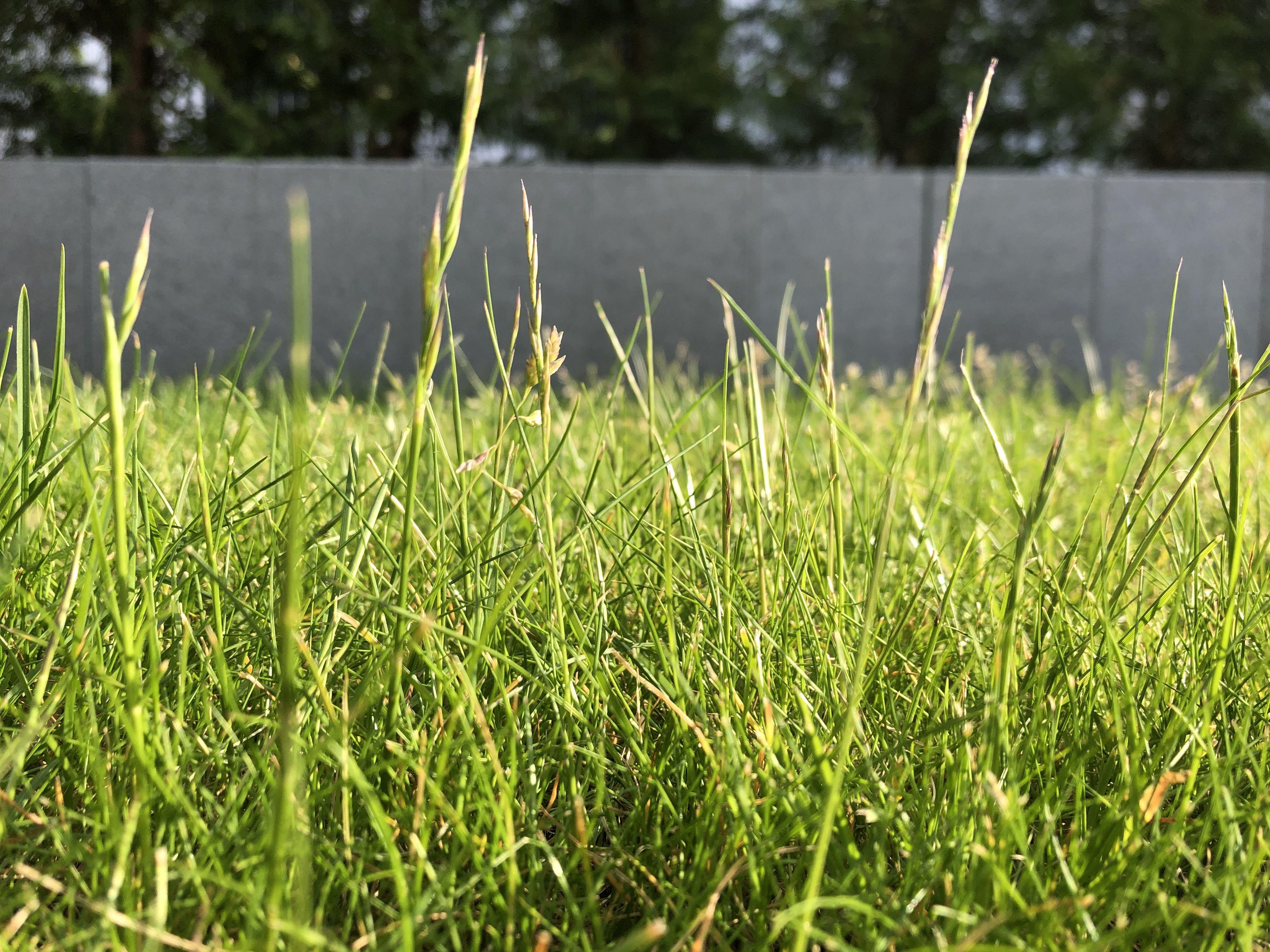 Perfekter Rasen Rasen Dungen Unkrautvernichter Garten Landschaftsbau