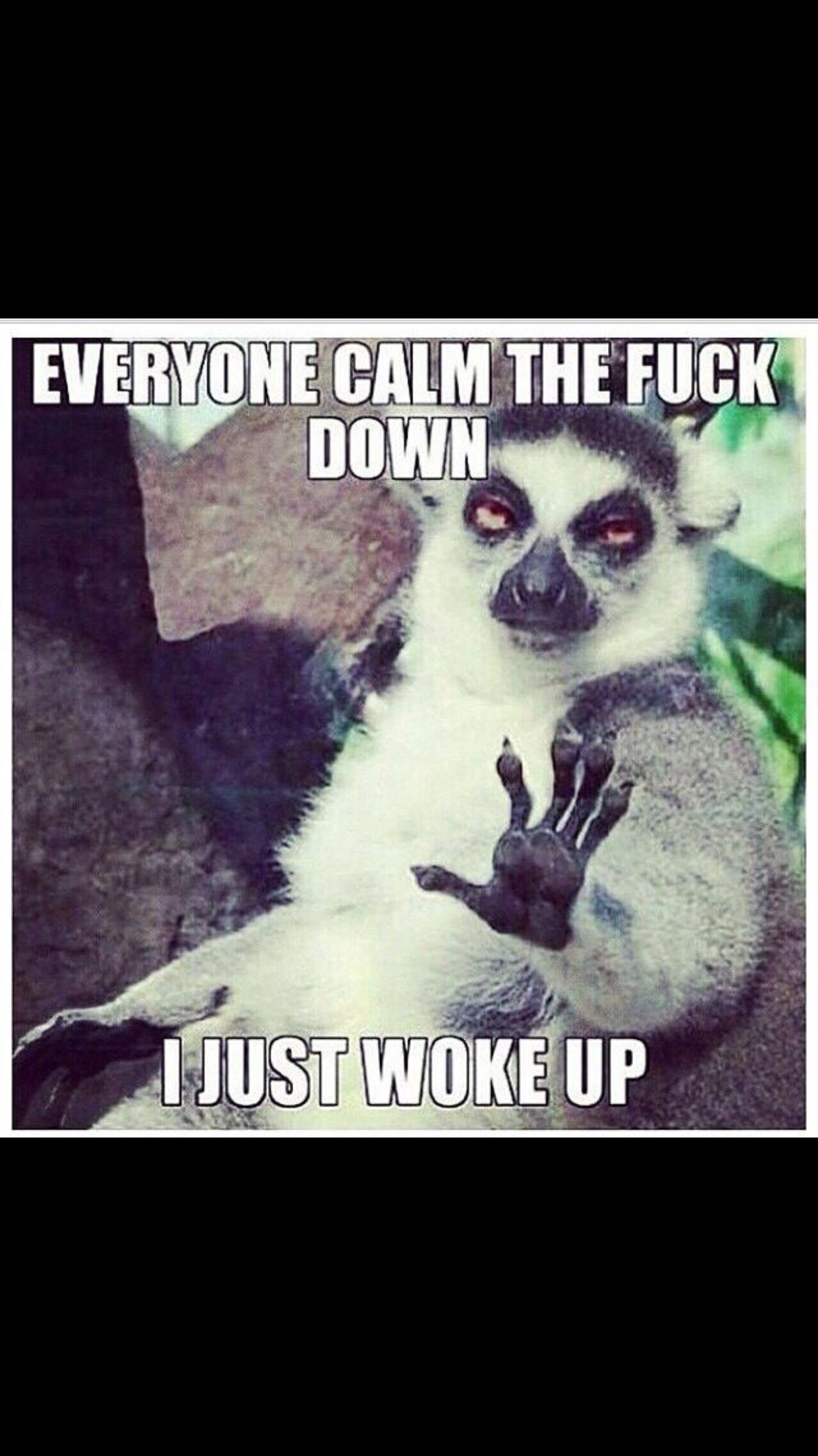 Calm Down I Just Woke Up Quotes Funny Funny Memes Gym Humor