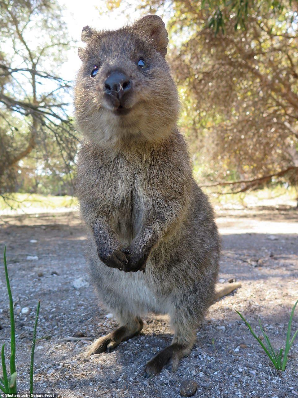 Counting the cost of Australia's horror bushfire season in
