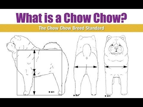 Akc Chow Chow Breed Standard Youtube Best Dog Breeds