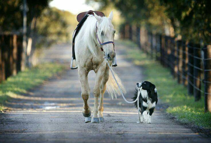 """Dog:  """"Keep up 'Beaumont' Please!  You should be able to keep up to me with ease!"""""""