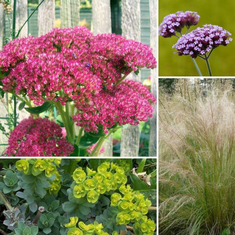 Jardin sans entretien conseils astuces et plantes adapt es fran ais jardins plante - Jardins sans entretien ...