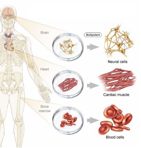 Different Types Of Cells - Google Search