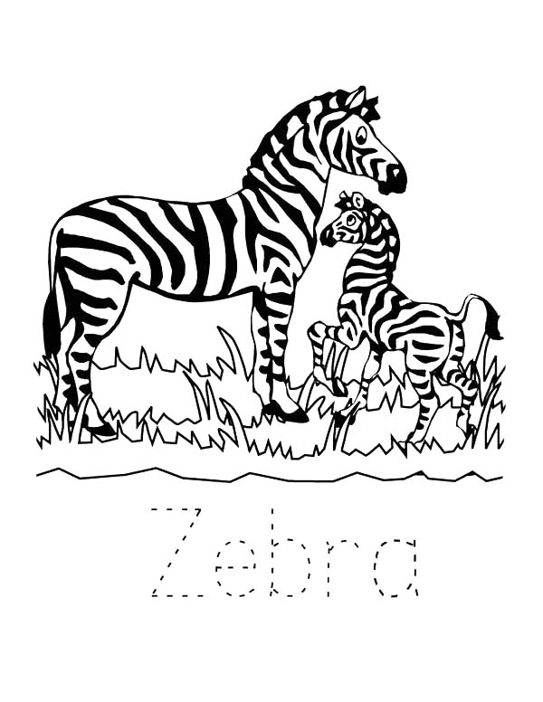 Zebra In The Zoo Coloring Page Download Print Online Coloring Pages For Free Color Nim In 2020 Zoo Animal Coloring Pages Zoo Coloring Pages Animal Coloring Pages
