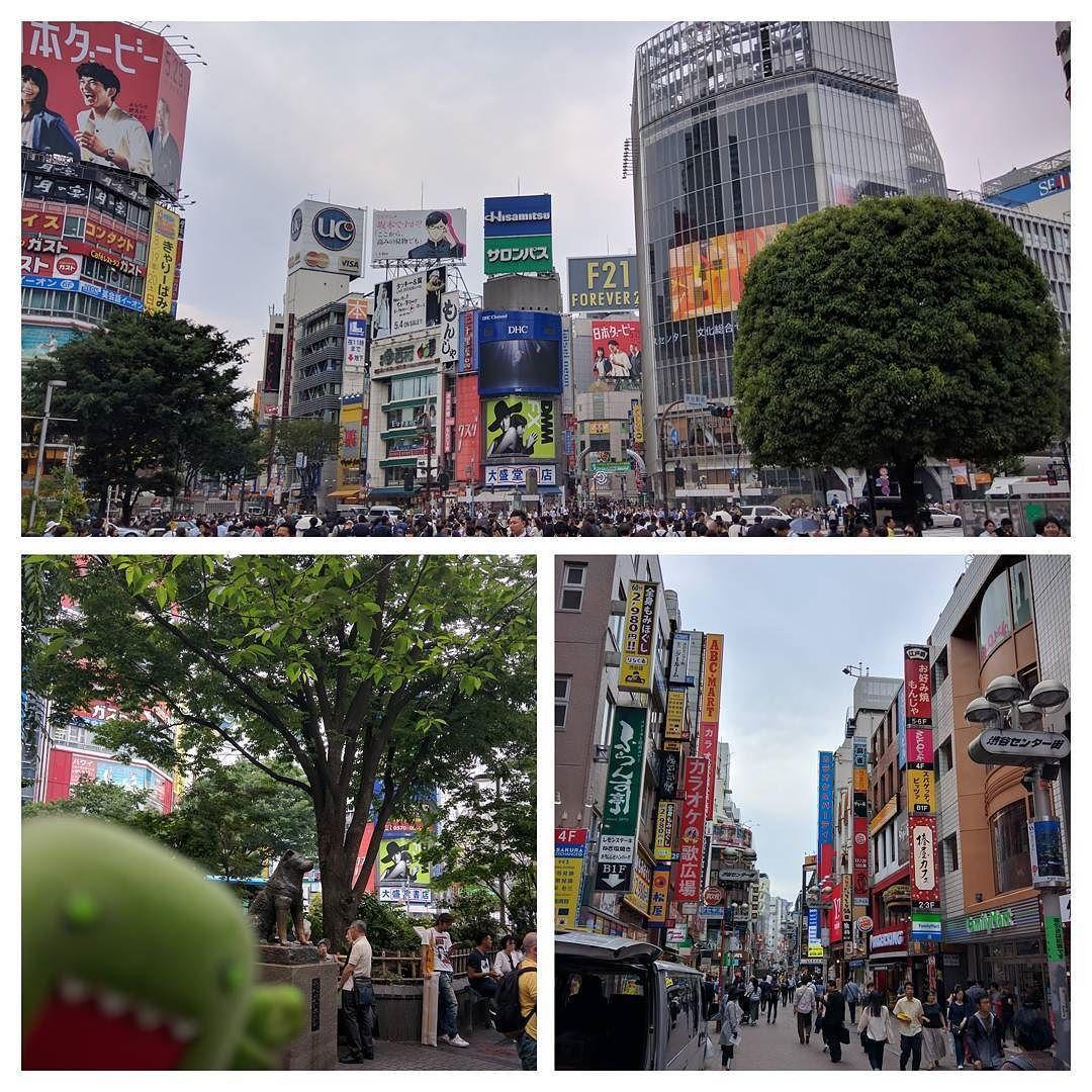 はちこだよ#渋谷#hachiko #domo #starbucks #matsumotokiyoshi #busy #intersection #いそがしい #blueskies #shibuya #hachiko #dog #akita #犬 #japan #luckytoleavehawaii #ifoundaniphone #小判