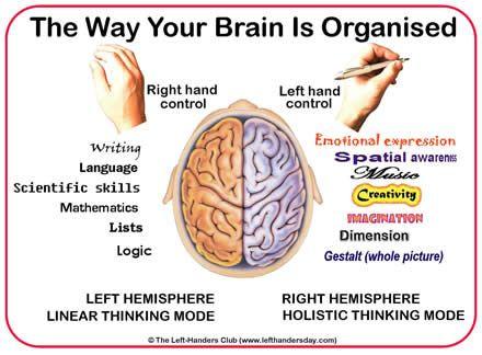 The Way Your Brain is Organized: Left brain right brain   Stumbles ...