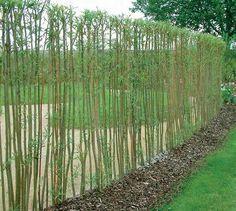 Weidenzaun Terrasse Pinterest Garten