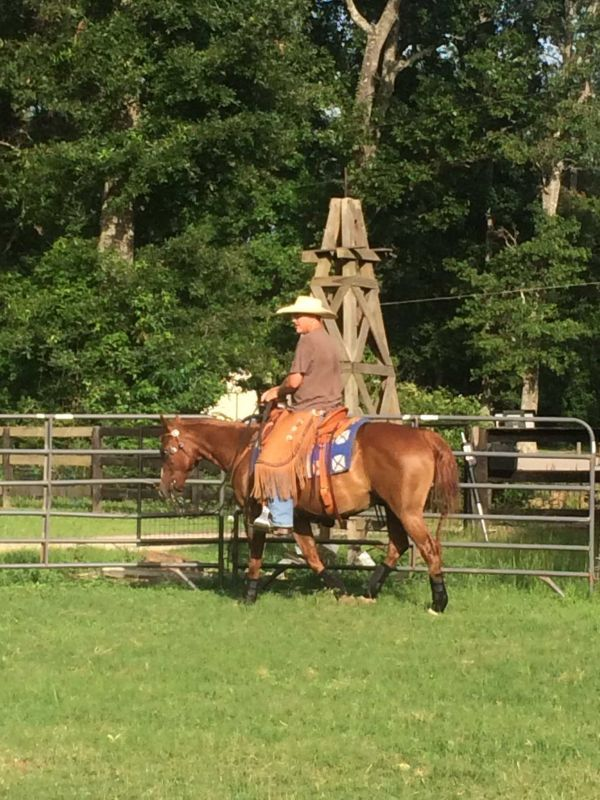 Freckles Lil Dulce- Ranch/All-aroud gelding
