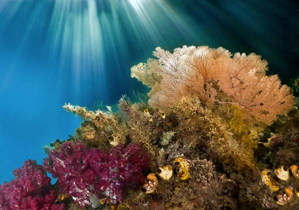 Pin by Liló Ventura on Biodiversity   Undersea world, Underwater photography, Photography projects