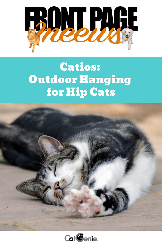Catios Outdoor Hanging for Hip Cats Cats, Cat run, Cat