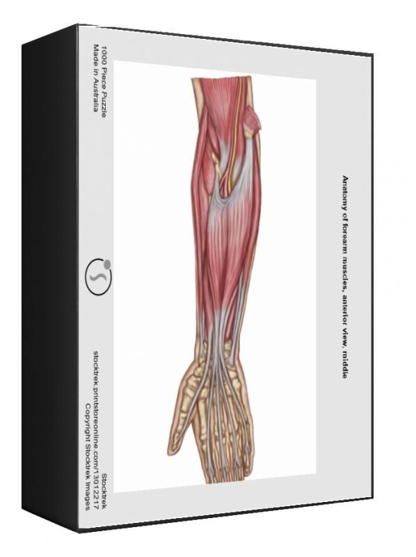 22+ 1000 Piece Puzzle. Anatomy of forearm muscles, anterior view,