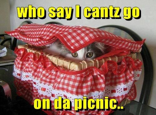 Picnickitteh