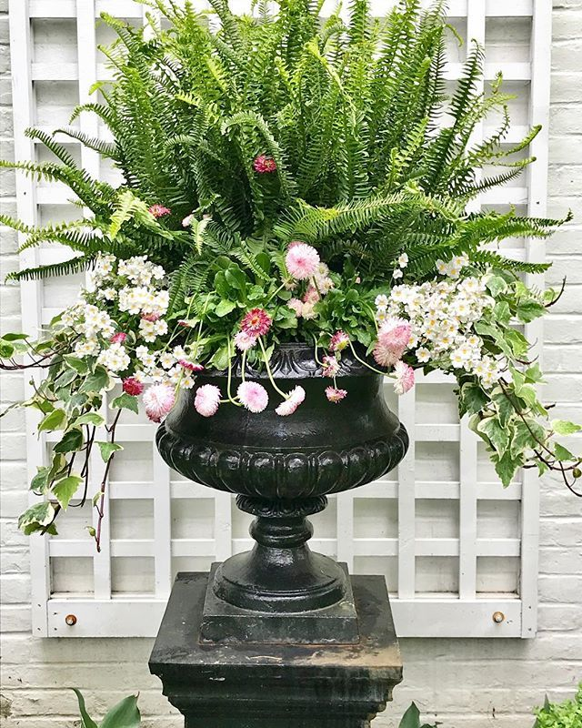 The ferns are in! Most of my urns are filled with ferns, which will last until November! #fridayflowers #ferns #gardenurns #urns #curbappeal