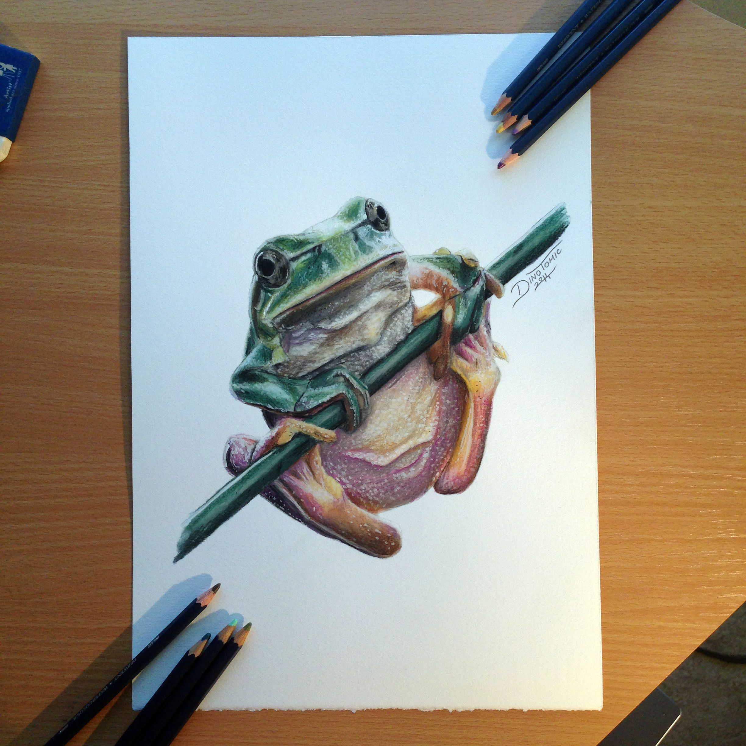 Color art colored pencils - Frog Color Pencil Drawing By Atomiccircus Deviantart Com On Deviantart