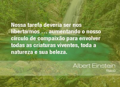 Frases Do Meio Ambiente Agro éco E Meio Ambiente Pinterest