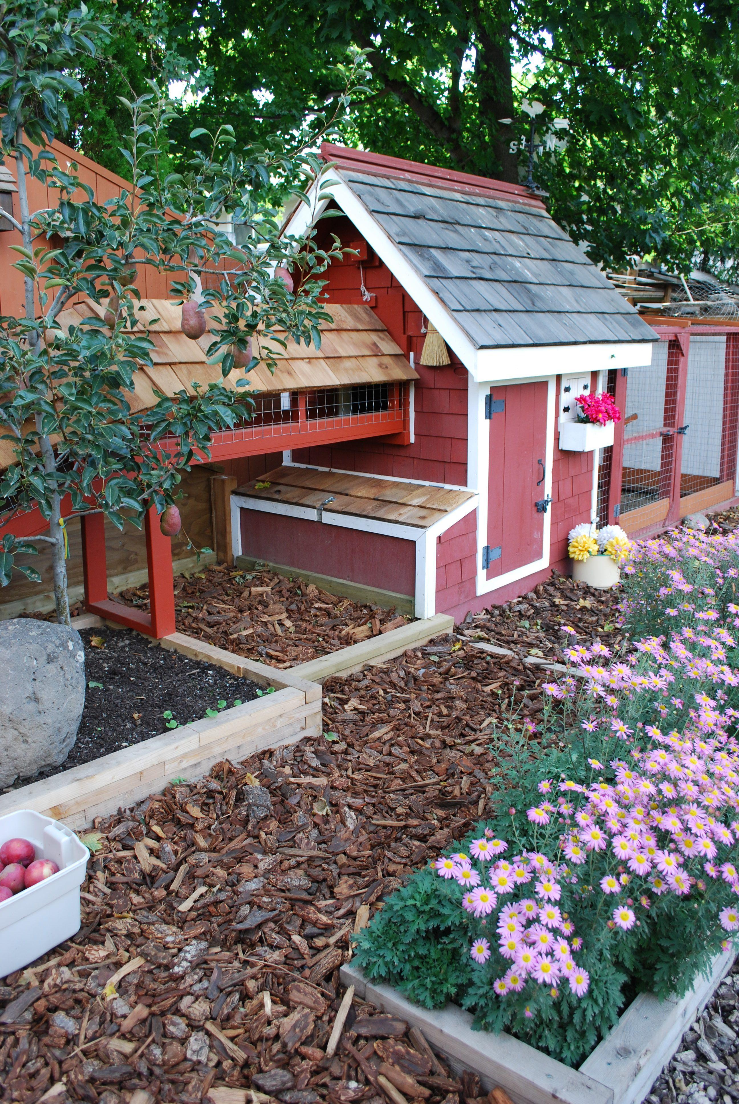 chicken coop. | Backyard farming, Chicken garden, Chickens ...