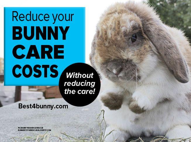 Rabbit Care Top Money Saving Tips Best 4 Bunny Rabbit Care Tortoise As Pets Bunny Care