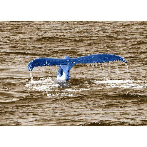 Photo of East Urban Home Glasbild Animals Whale Tail, Fotodruck in Blau