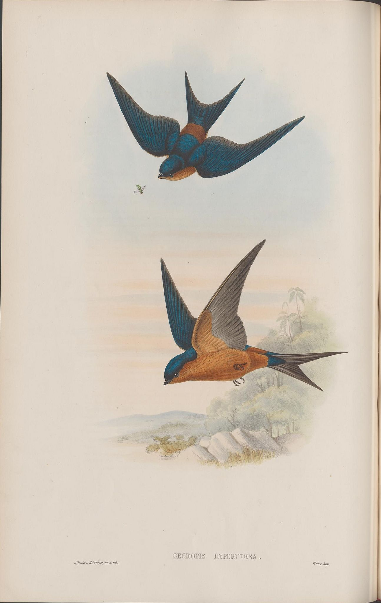 """https://flic.kr/p/ntgHDC 