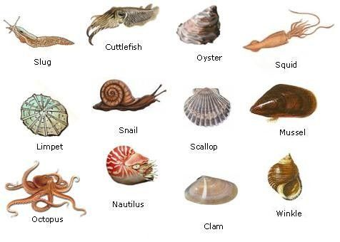 read about the many different types of molluscs from two shells to