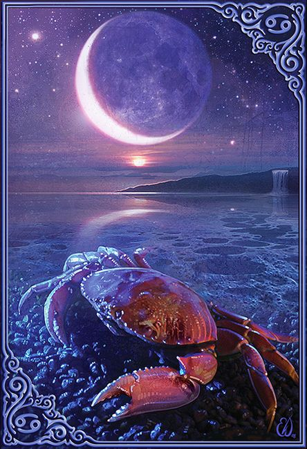 eric Williams Illustration of crab | Cancer moon, Zodiac signs cancer,  Astrology cancer