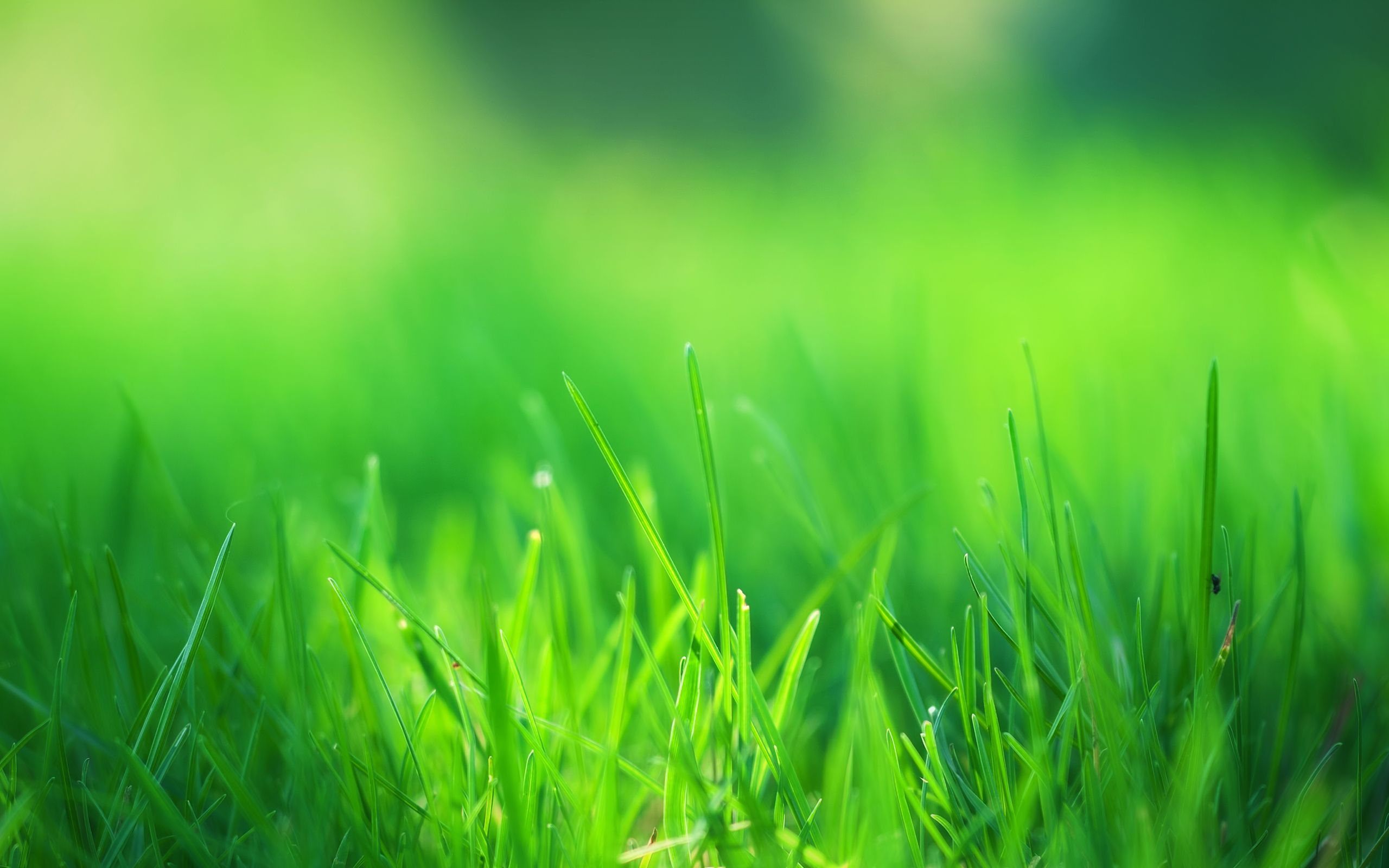 Green Grass Field Wallpapers | HD Wallpapers | Epic Car