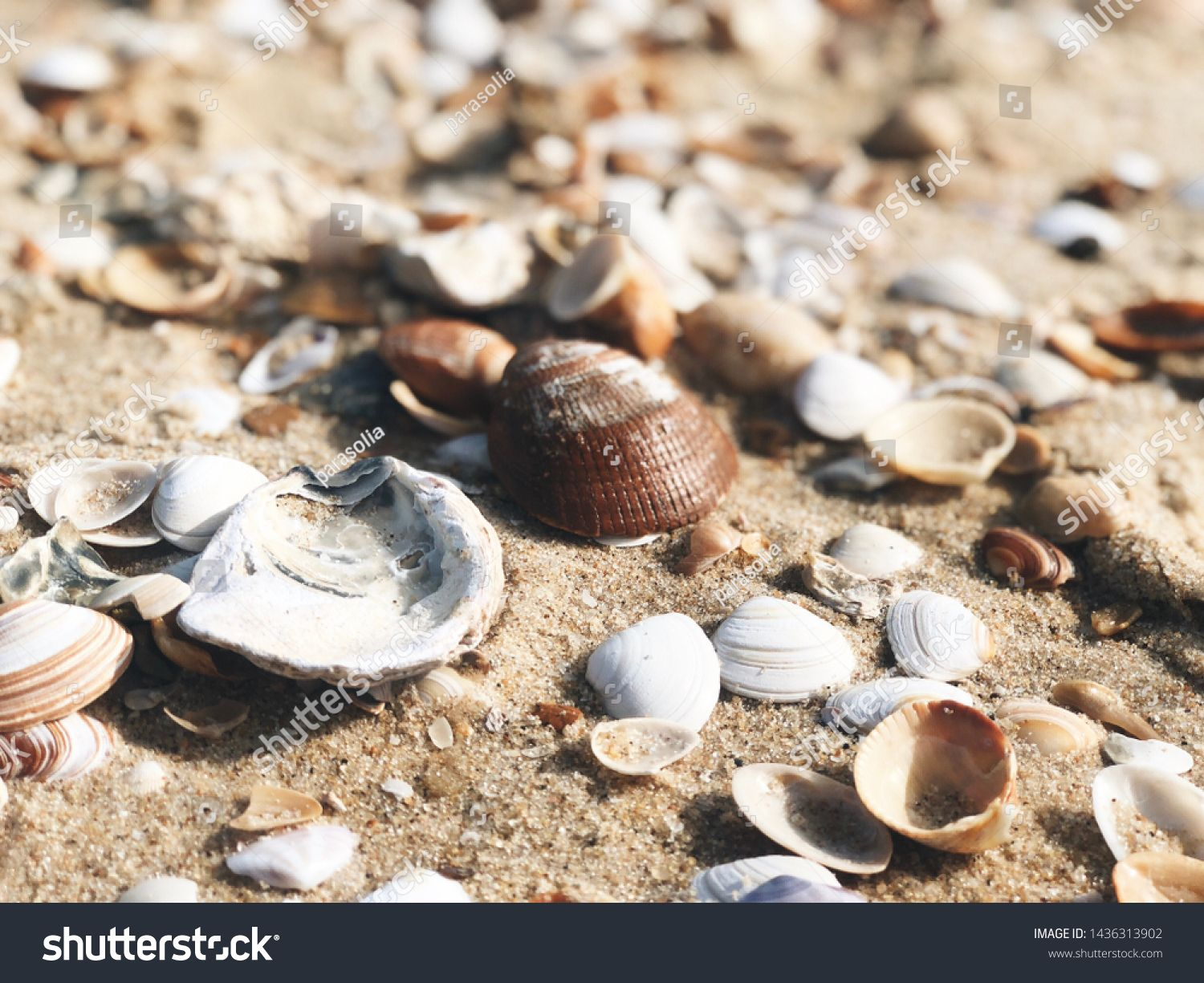 Sea Shells On Sand Close Up For Summer Wallpapers Ad Spon Sand Shells Sea Wallpapers Summer Wallpaper Stock Photos Photo Editing