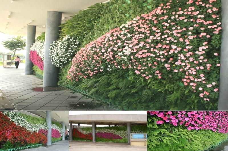 Vertical Garden | Vertical Garden Maintenance Kerala