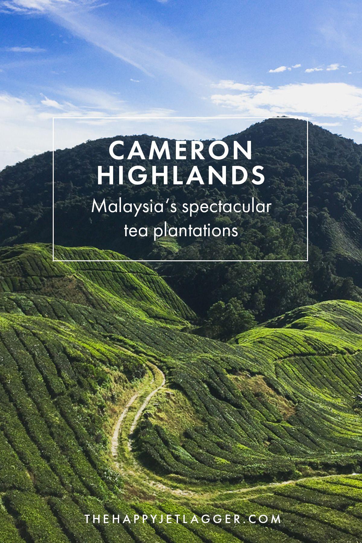 Cameron Highlands Naturerlebnis in Malaysia! Tipps für