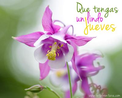 Feliz Jueves  Mensajes en tarjetas con flores para compartir