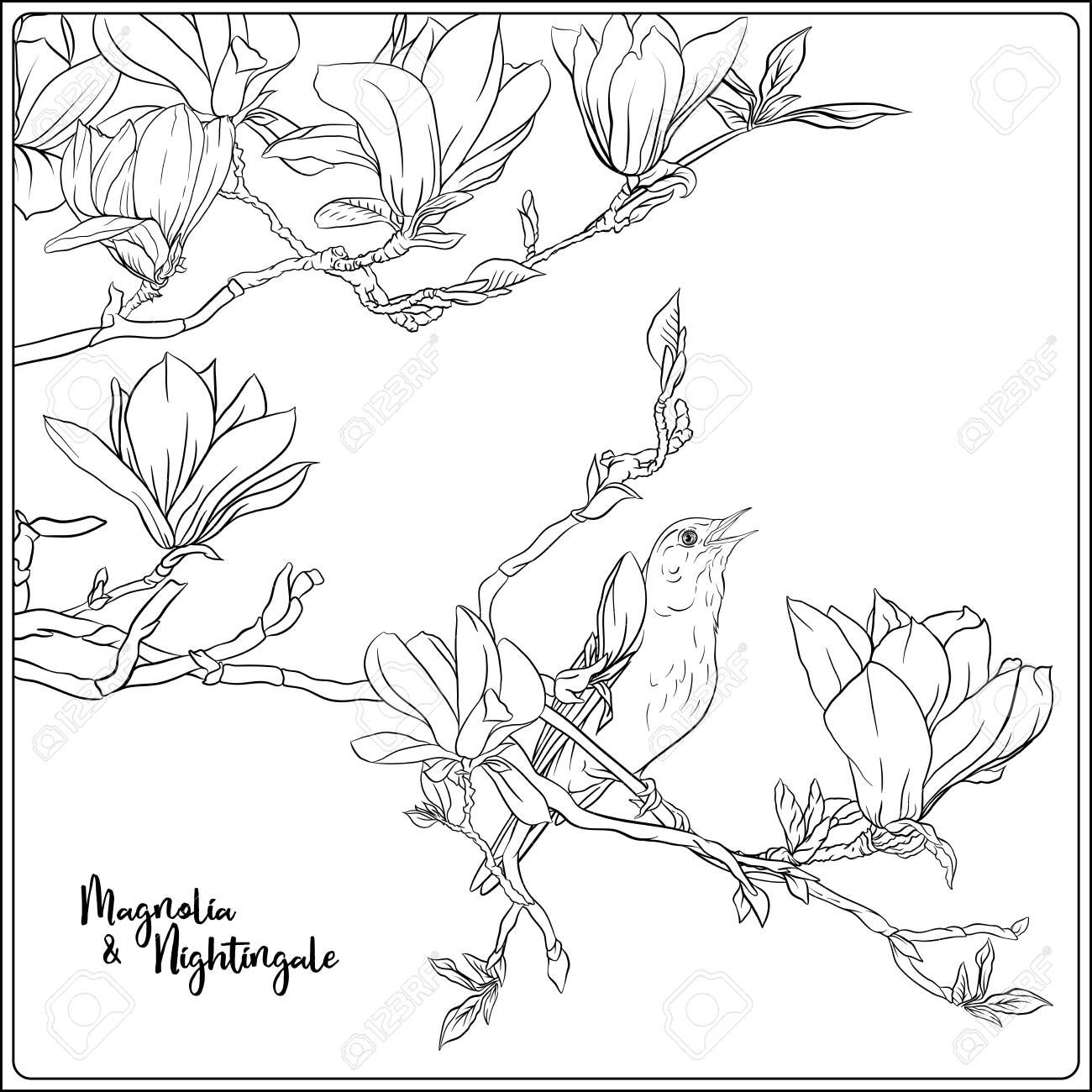 Magnolia tree branch with flowers and nightingale Coloring ...