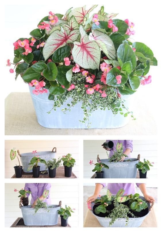 Calling all porches! This shade-loving mix is just for you! Ingredients: White Queen Caladiums, Whopper Begonia, Variegated Creeping Fig by Carmen Johnston Gardens -   24 white garden pots ideas