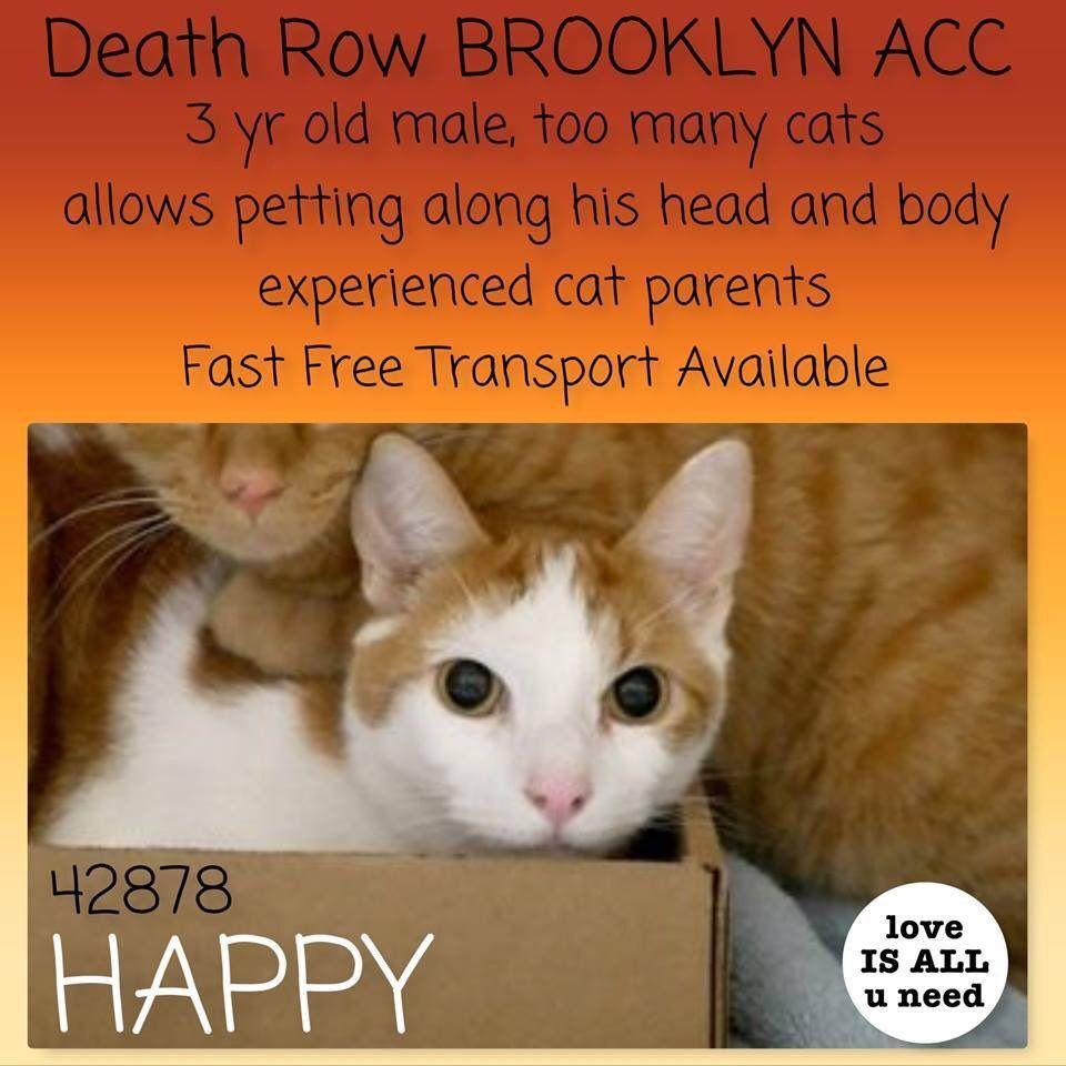 Catsrangels on cats for adoption pinterest