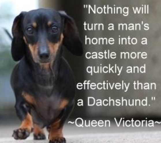Another Reason To Love Queen Victoria Dachshund Weenie Dogs