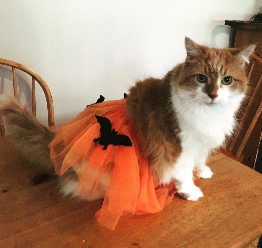 Halloween is coming Dex 👻