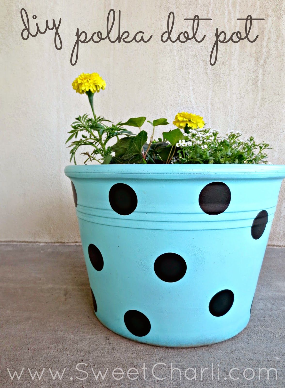 Pinterest & DIY Polka Dot Flower Pot from an old terra cotta pot using spray ...
