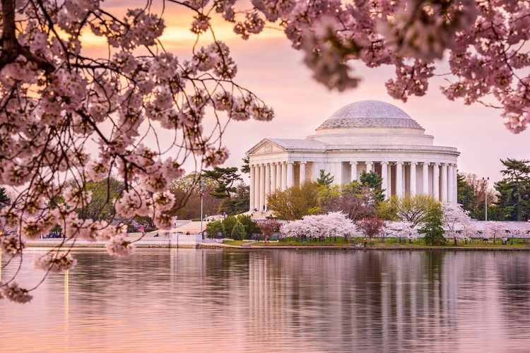 Best Places To See Cherry Blossoms In The U S National Geographic Most Beautiful Places Beautiful Places Beautiful Places To Visit