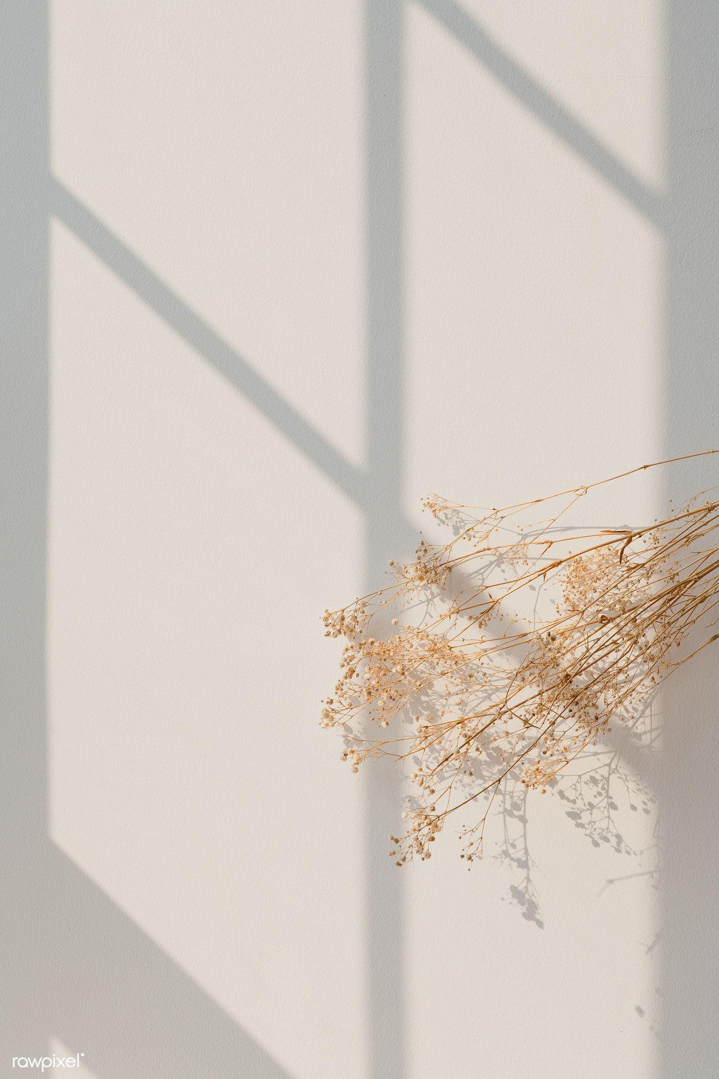 premium image of dried gypsophila with window