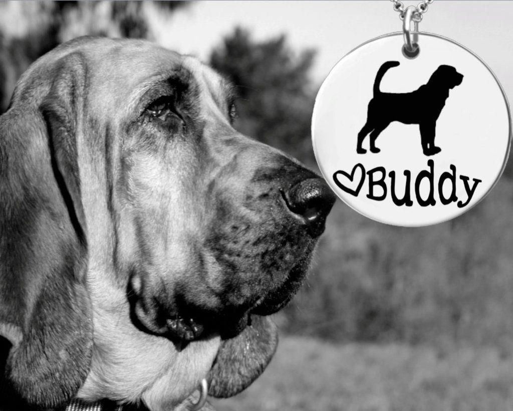 DogCarSeat Bloodhound dogs, Dogs, Cat vs dog